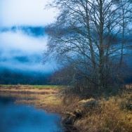 tree in blue misty landscape