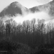 moody black and white misty mountain