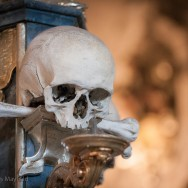 Skull with defocused background