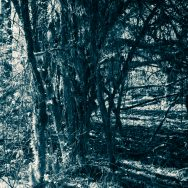 dark infrared image of a forest path