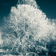 infrared tree with contrast