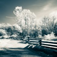 meadow with trees and old wooden fence in infrared