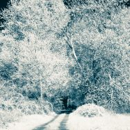 path leading to a very large tree all in infrared